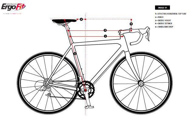 Phenomenal The Science Of Bike Fitting Gebiomized Bralicious Painted Fabric Chair Ideas Braliciousco